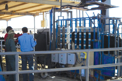Cattle and Livestock height measurement with lasers